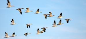 Importance des oiseaux dans l'écosystème