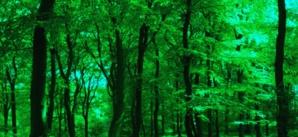 Changements climatiques la nature est la solution