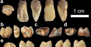 Maroc:  Découverte des restes d'un macaque vieux de 2,5 millions d'années