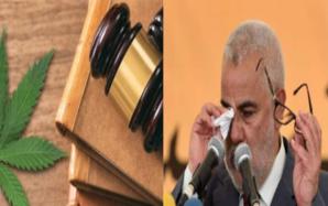 Le projet de loi 21.13 adopté après sa longue prise en otage par le PJD