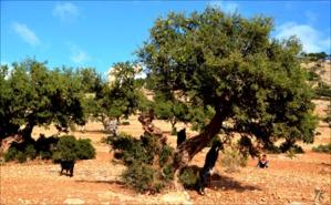 L'arganiculture la recherche avance