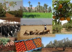 Compagne agricole : Amélioration du couvert végétal