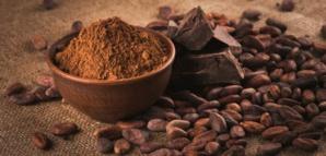 La poudre de cacao nous aide à maigrir !
