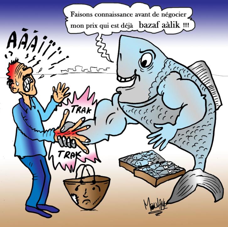 Sardine, Oh ma sardine !