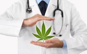 Le cannabis à usage thérapeutique rapporte--il assez pour soigner les maux des provinces concernées ?