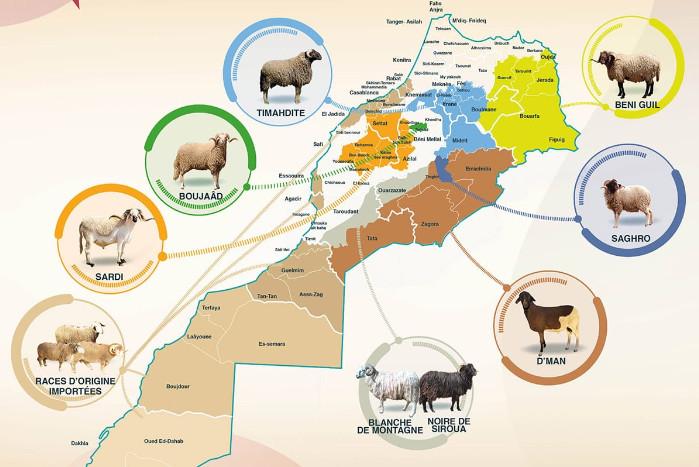 Comment choisir son mouton pour l'Aïd