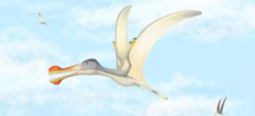 3 nouvelles espèces de ptérosaures à dents découvertes au Maroc