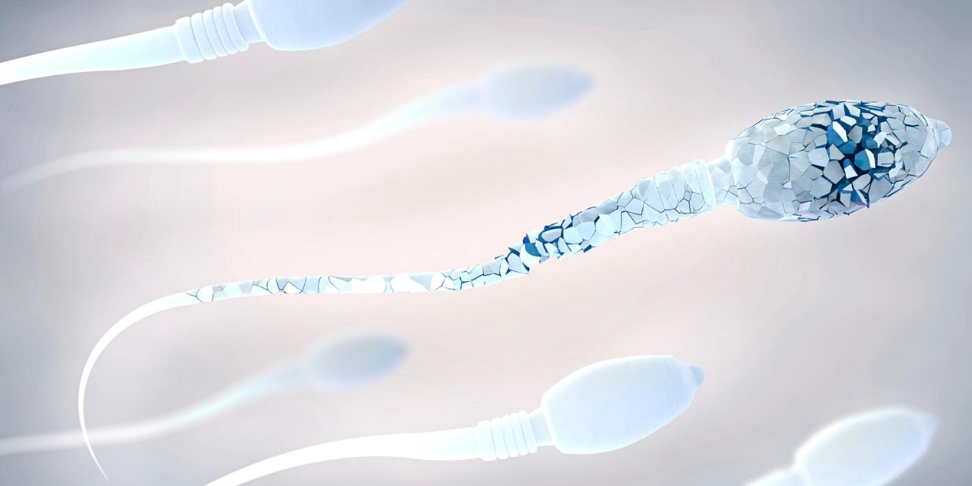 Covid-19 et fertilité masculine
