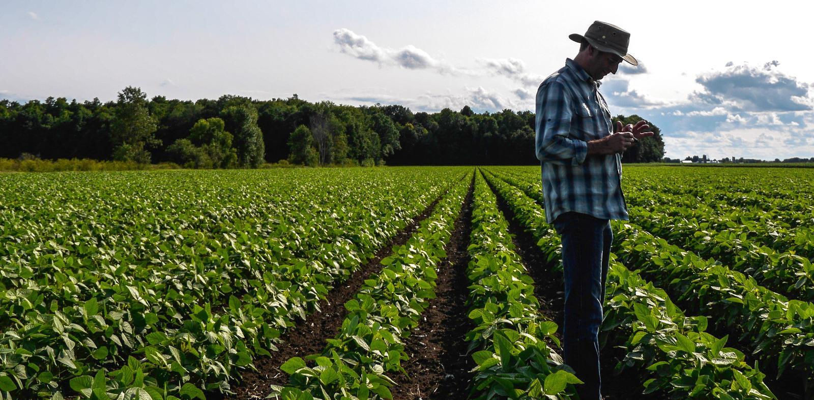 Maroc : intégration des migrants subsahariens dans les métiers d'agriculture