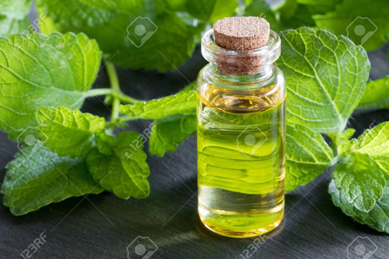 Les bienfaits de l'huile essentielle de mélisse sur le corps