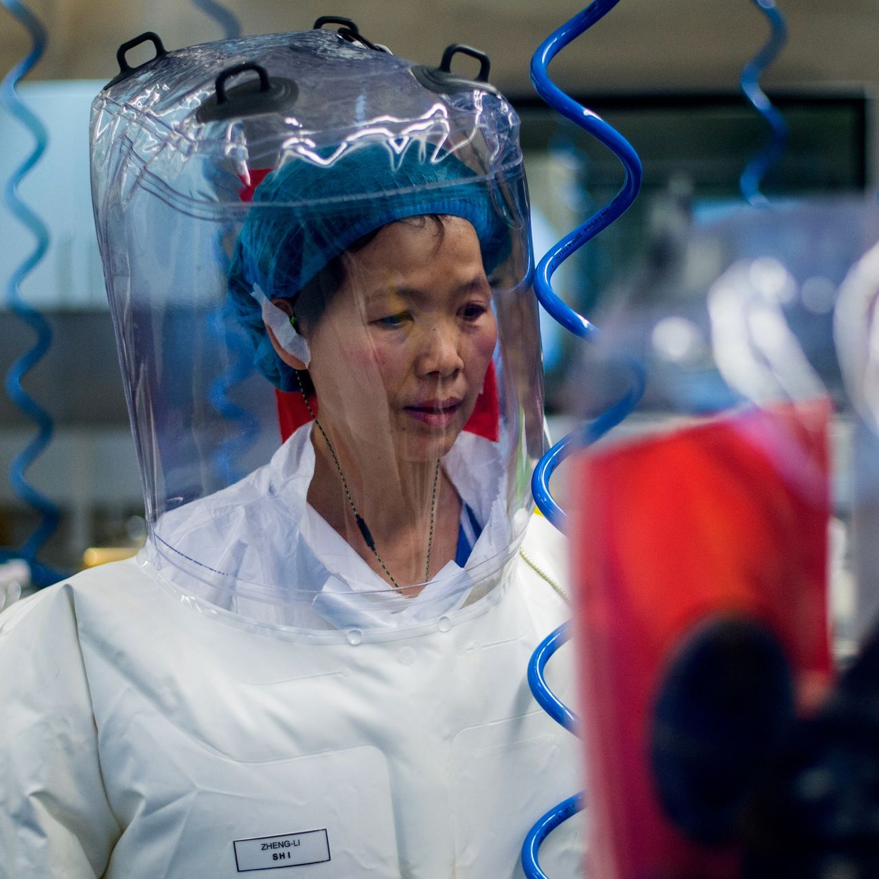Dr Shi Zhengli, alias 'Bat Lady', qui teste des virus 'augmentés' sur des souris 'humanisées'