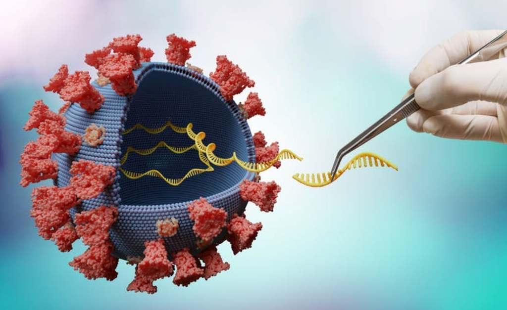Gain de fonction, la 'science' qui rend les virus plus 'agressifs'