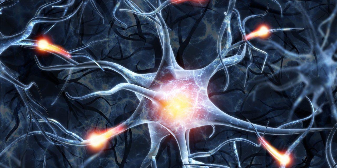 Régénérer des neurones perdus ?