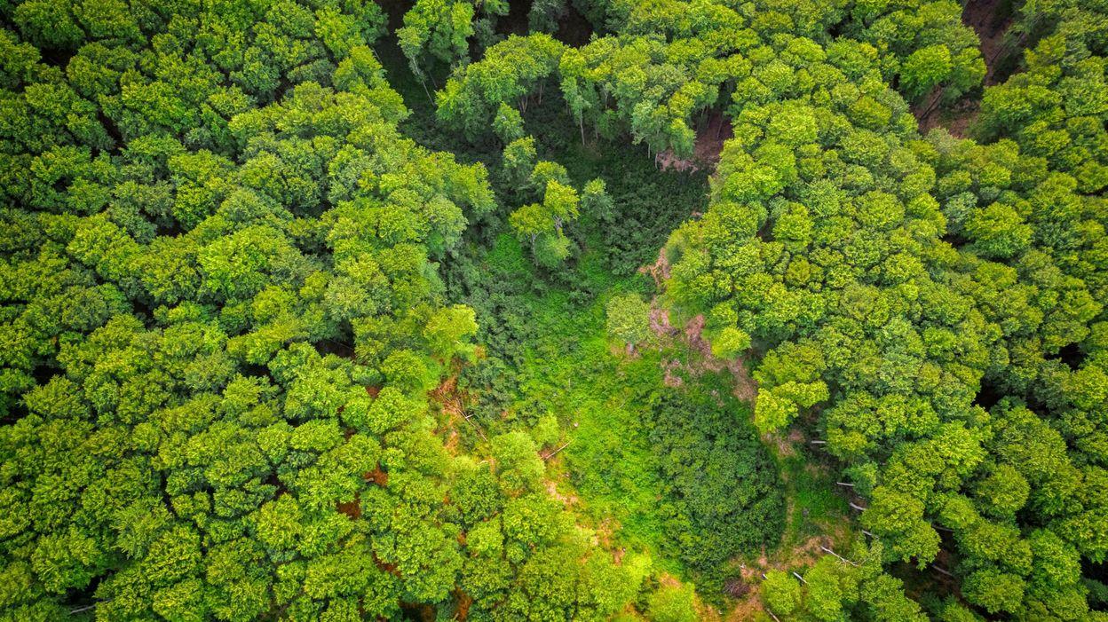 Facebook interdit la vente de la forêt amazonienne sur sa marketplace