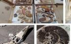 Saisie de 200kg de pièces géologiques interdites à l'exportation