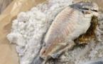 Poisson au gros sel