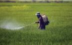 Des légumes marocains retirés des marchés à l'étranger, faute aux résidus de pesticides
