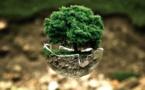 4,5 millions d'arbres plantés par l'OCP à fin 2020