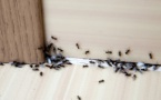 Nos astuces naturelles pour se débarrasser des fourmis