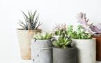 5 plantes à mettre dans votre maison pour purifier l'air intérieur