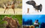 Comedy Wildlife 2021 : Voici les photos d'animaux les plus drôles de l'année