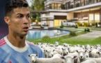 Cristiano Ronaldo déménage de sa maison à cause d'un ... mouton !