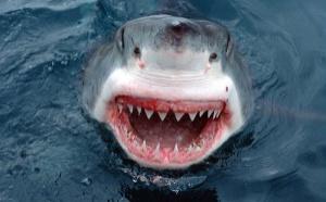 Comment font les requins pour dormir ?