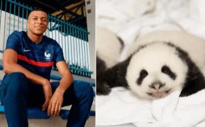 Mbappé sera le parrain d'un bébé panda de zoo de Beauval