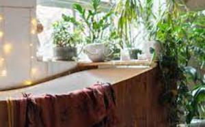 4 plantes d'intérieur qui absorbent l'humidité