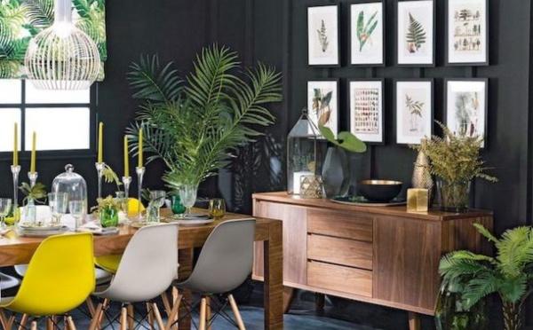 Rafraîchissez votre espace avec des plantes résistantes !