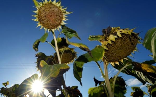 2020, année la plus chaude sur Terre, à égalité avec 2016