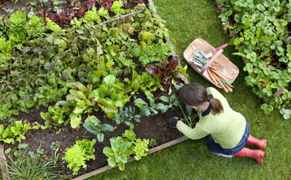 C'est le printemps, voici une liste de légumes à planter dès maintenant !