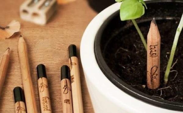 'Sprout' : le crayon qui germe quand on le plante