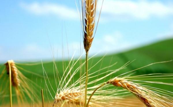 Produits alimentaires : Net renchérissement des cours mondiaux